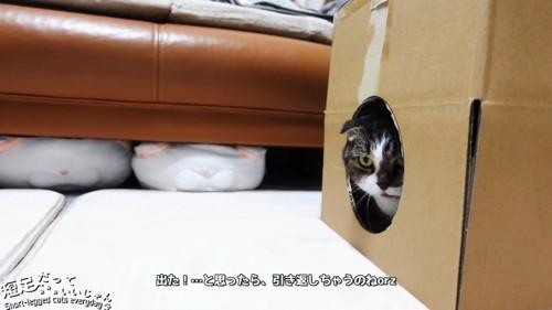 箱から少し顔が見える猫