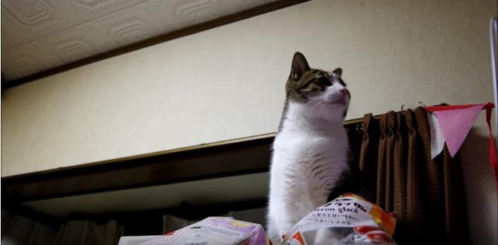 右を向く猫