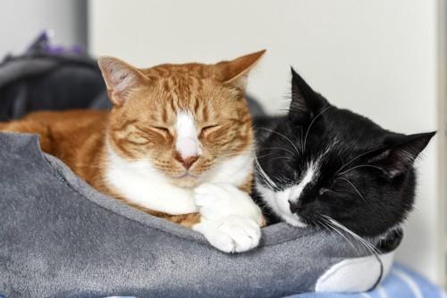 眠る二匹の猫