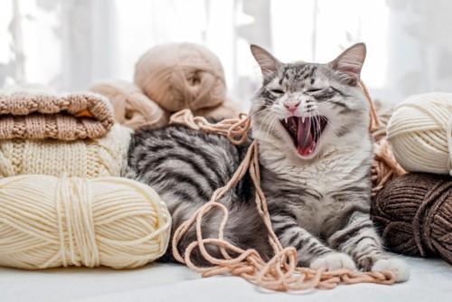 毛糸とあくびをする猫