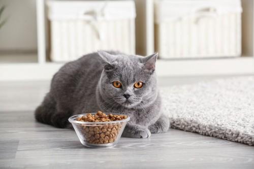 置き餌を前に座る猫