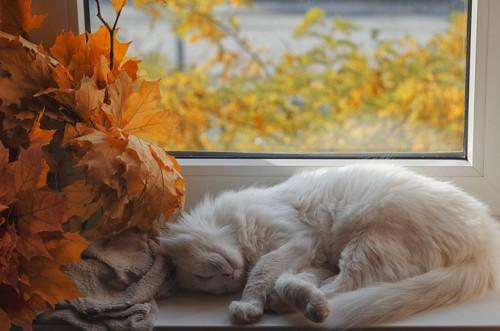 窓の前で寝る猫