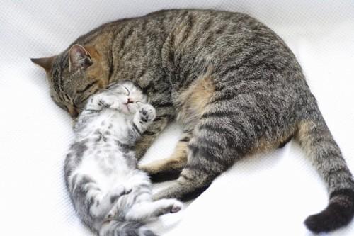 一緒に寝ている猫