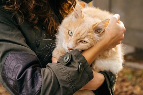 女性に抱かれて嫌そうな顔をする猫