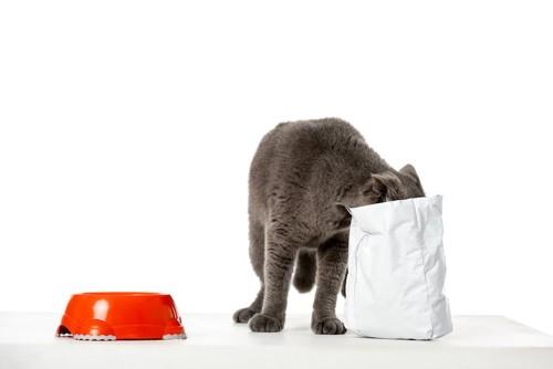 キャットフードの袋に顔を突っ込んでいる猫