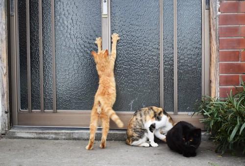 玄関先で二本足で立つ猫