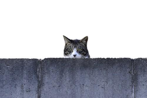 壁からこちらを監視する猫