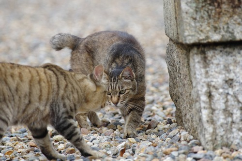 にらみ合う猫
