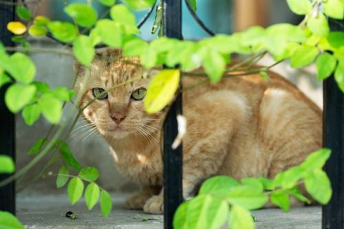 外からこちらを見る猫
