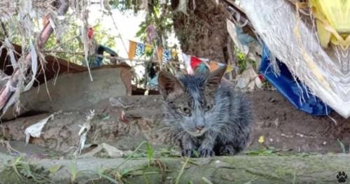 うずくまるグレーの猫
