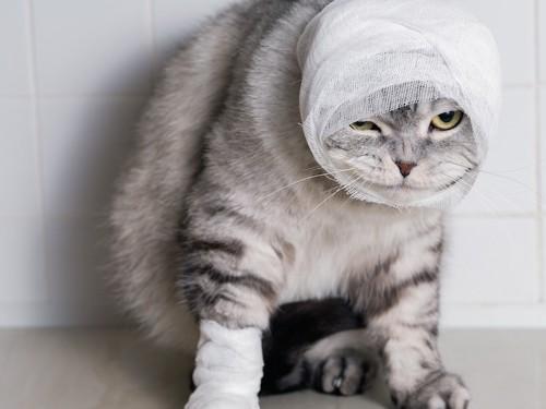 顔に包帯を巻いた猫