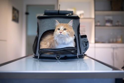 キャリーバッグに入った猫と病院