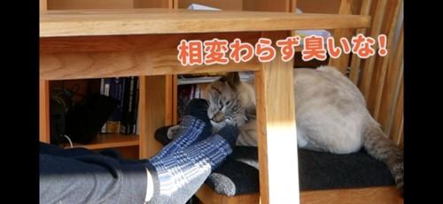 机の下から足を噛む