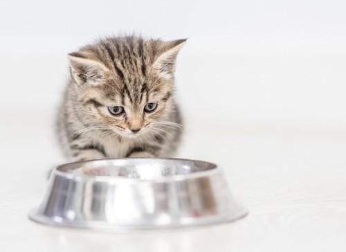 お皿の前に座る猫