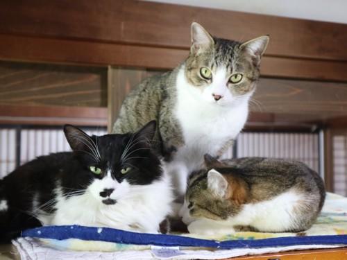 #高いところにベッドや棚があって猫もイキイキ#