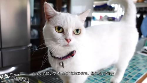 立っている白猫