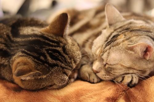 直射日光の当たらないところで寝る猫