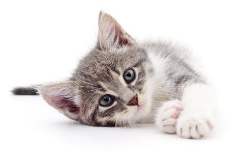 寝転びながらこちらを見る子猫
