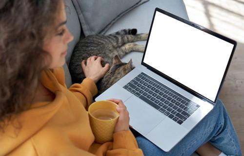 パソコンを見ながら隣で眠る猫を撫でる女性