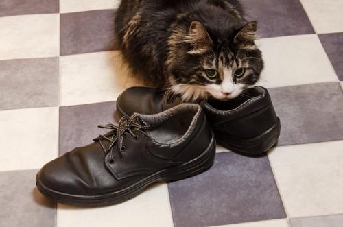 靴に密着する猫