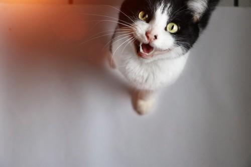 要望がありそうな猫