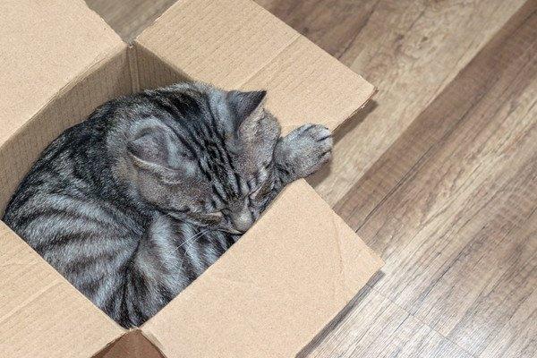 段ボールに収まる猫