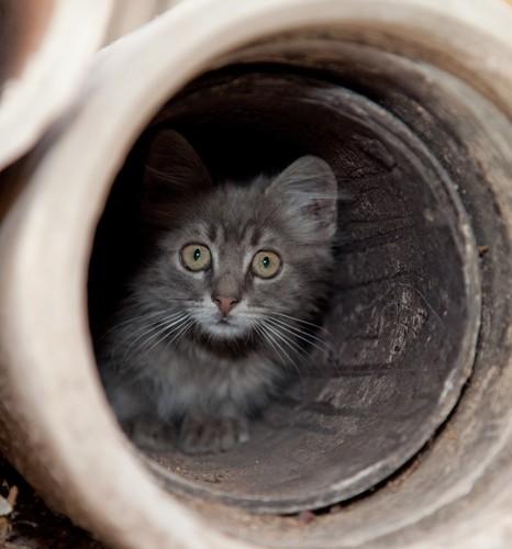 隠れる子猫