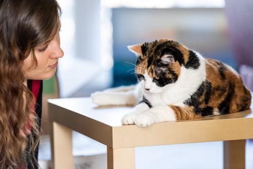 台の上で休んでいる猫を見つめる女性