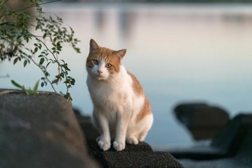 水辺にいる猫