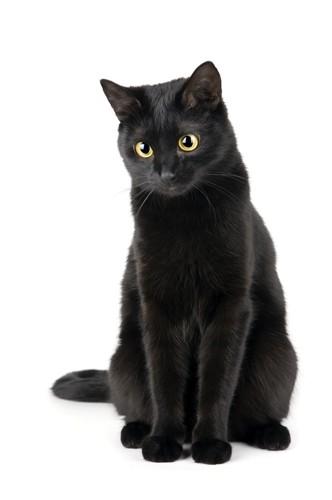 すらっとした美人な猫