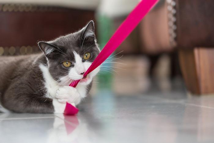 太い紐で遊ぶ猫
