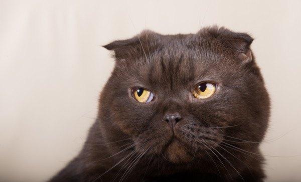 目だけ上を向く黒猫