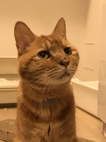 猫 雑種(ミックス) テトの写真