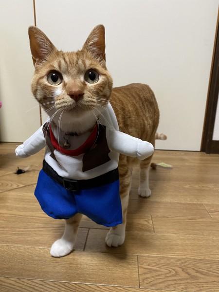 猫 雑種(ミックス) ネイ治郎の写真