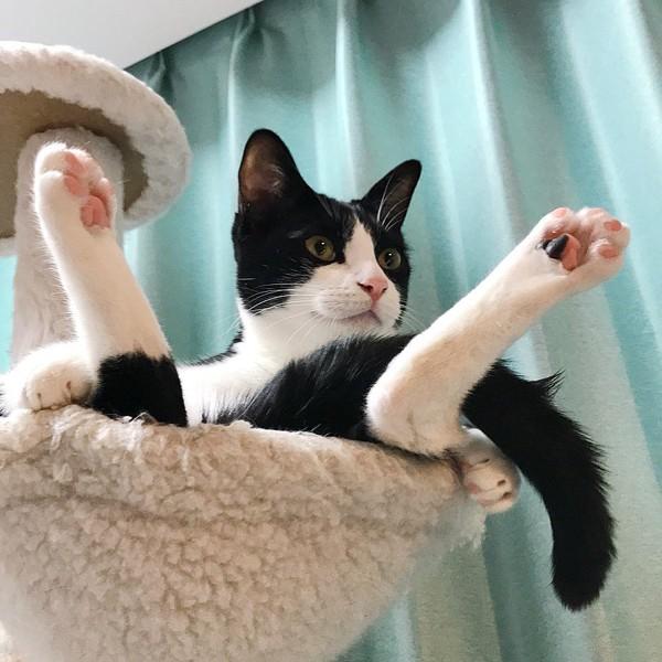 猫 茶白トラ ニーノの写真