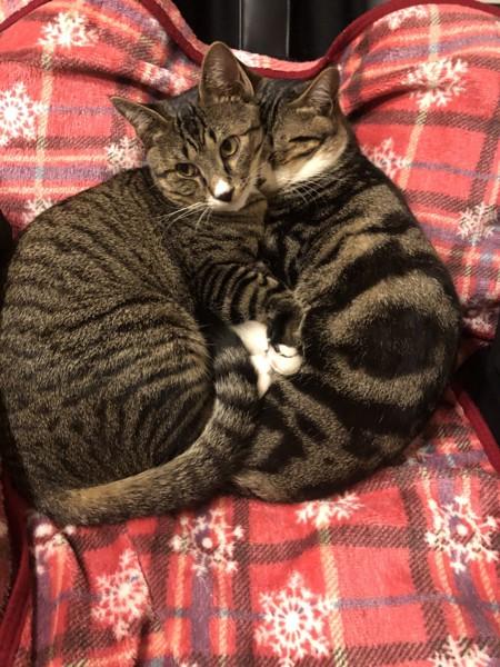 2匹でくっついてぬくぬくする猫