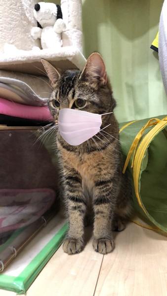 猫 雑種(ミックス) はなちゃんの写真