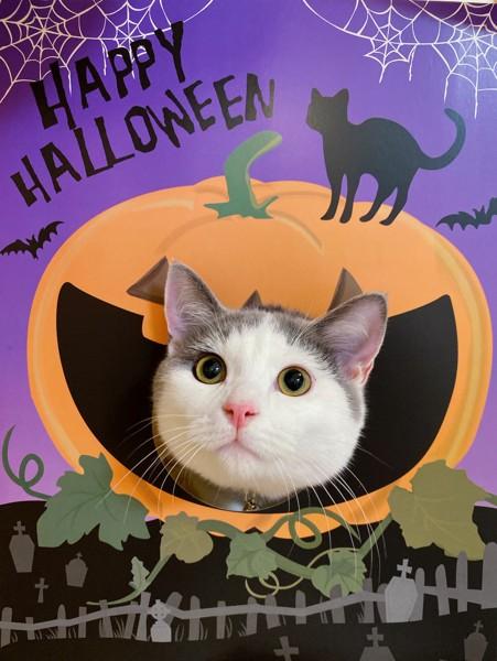 ハロウィンのパネルと猫