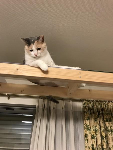 猫 雑種(ミックス) めいさんの写真