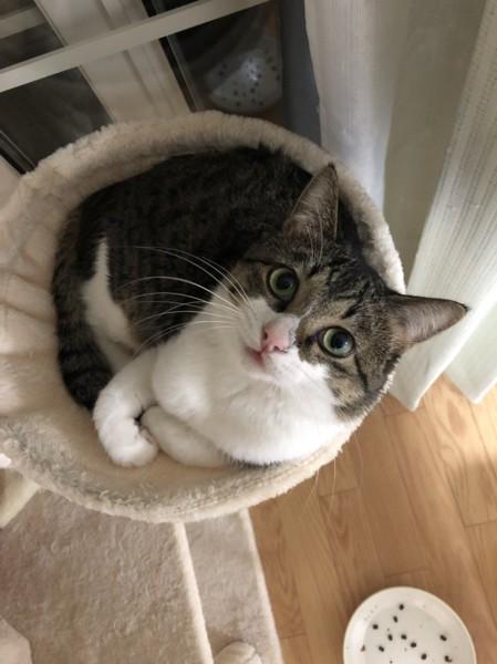 猫 雑種(ミックス) ヤマトの写真