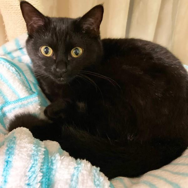 猫 和猫 アナちゃんの写真