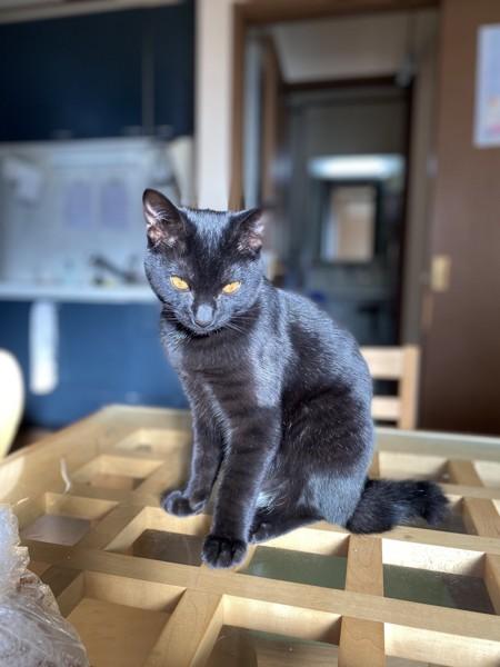 猫 黒猫 エレ君の写真