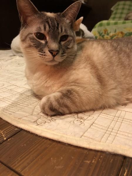 猫 雑種(ミックス) O次郎の写真