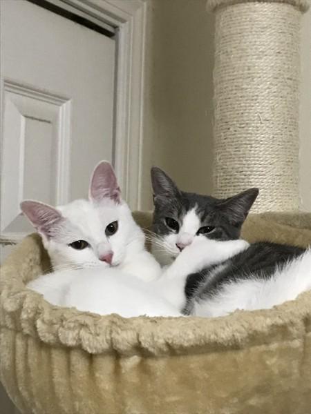 猫 雑種(ミックス) ラン&リンの写真