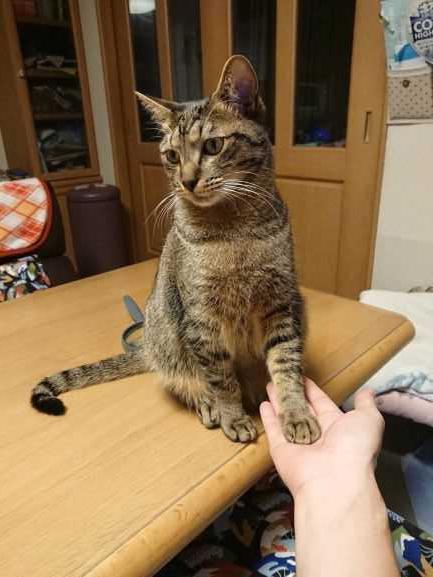 猫 雑種(ミックス) セナの写真