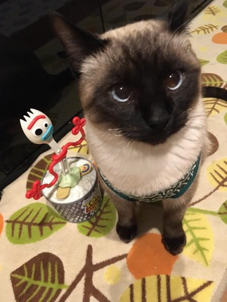 猫 シャム 次元の写真