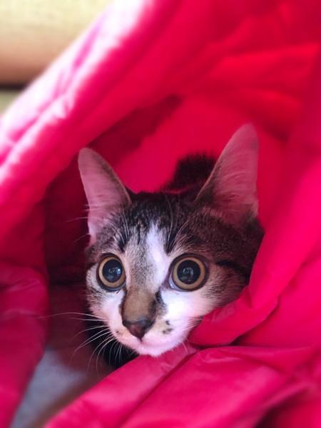 猫 雑種 ひまわりの写真