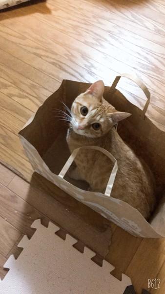 猫 茶トラ はくちゃんむぎちゃんの写真