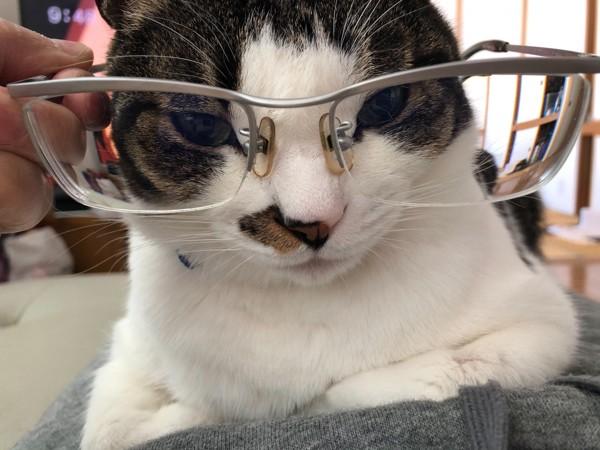 猫 雑種(ミックス) とむの写真