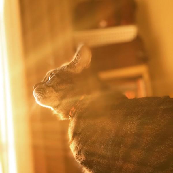 猫 キジトラ ルナの写真